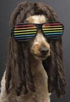 80's Poodle with Dreads