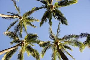 Palm Tree photo