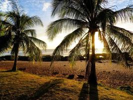 silueta de palmera al atardecer