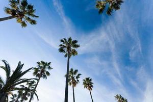 Palm tree-lined Shonan