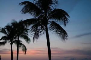 copas de palmeras siluetas foto