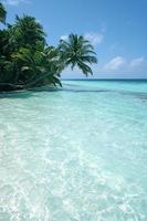 palmtree on the sea photo