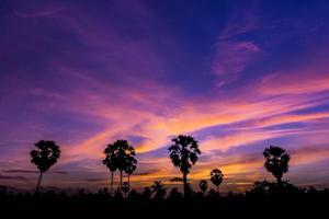 Palm tree on twilight time photo