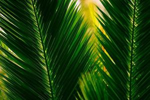 Palm Leaves photo
