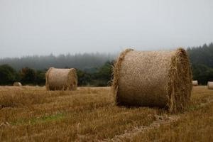 Round Straw Bale In Stubble Field