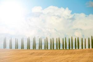 Cypress trees on blue sky background in Tuscany, Italy