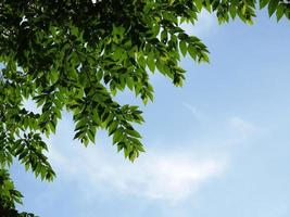 Green leaf with clear sky background
