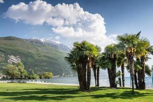 palmeiras no lago garda