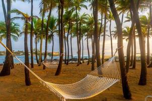 hamaca suspendida de palmeras foto