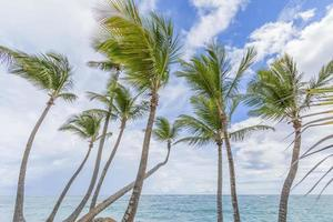 Palm trees on the beach. photo