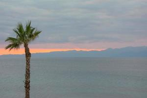 Sunset behind a palm tree photo