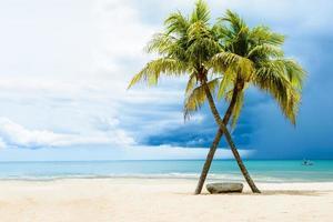 Green tree on white sand beach photo