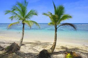 dos palmeras en la playa foto
