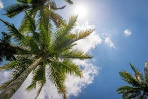 palmeira, terraços de arroz em bali