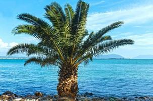 Palm tree on summer beach (Greece) photo