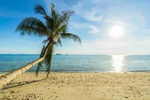Coconut Palm tree on paradise beach