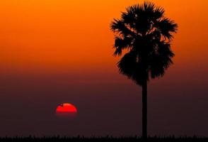 silhouettes of palm tree against sunset background photo