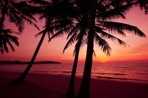 palm trees silhouette on sunset tropical beach.