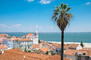 vista sobre Lisboa com uma palmeira