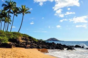 Beach with palm trees on Maui, Hawaii