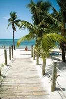 Pathway leading to beach with palm trees