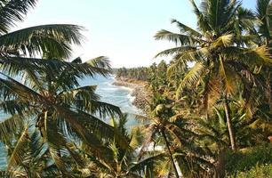 Palm trees on the coast of Kerala photo