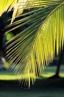 las hojas de palma con gotas de agua en las puntas en los trópicos