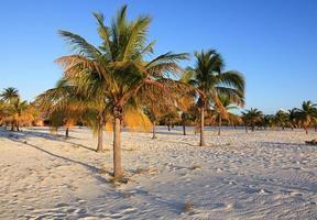 Palm trees on the white sand. Playa Sirena. Cayo Largo. photo
