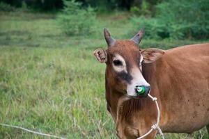 prado de toros