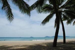 sombra de las palmeras en una playa tropical foto