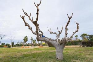 Dog and tree.