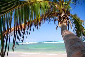 Palms on tropical beach photo