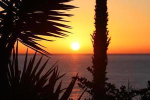 Sonnenaufgang am Meer mit Palmen photo