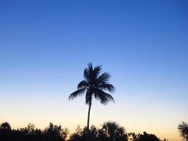 Palm tree silhouette at sunrise photo
