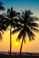 Sihlouette od palm trees at the seashore in Sri Lanka