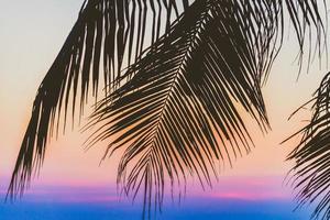Silhouette palm tree photo
