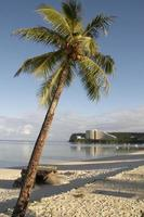 Single green coconut palm tree photo