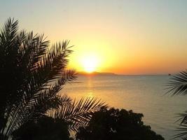 Sunset behind palm trees, Djibouti photo