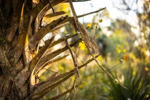 Palm Frond photo