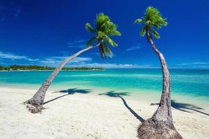 Palm trees hanging over lagoon with blue sky in Fiji