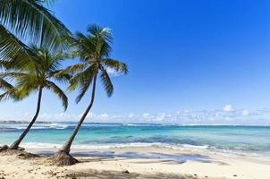 playa tropical en le moule, isla de guadalupe foto