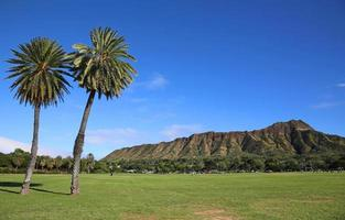 Two palm trees and Diamond Head
