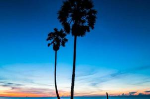 palmeiras de açúcar com luz da manhã.