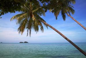Two palm-trees against tropical islands photo
