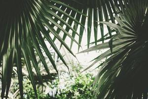 Palm leaves photo