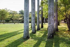 Group of betel trees