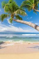 soleada playa tropical foto