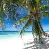 Palm on white beach, Boracay island photo