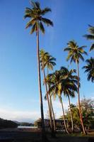 Palms at sea coast photo