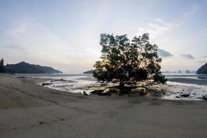 árboles de luz crepuscular sol